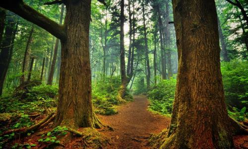 foreste vincolo idrogeologico