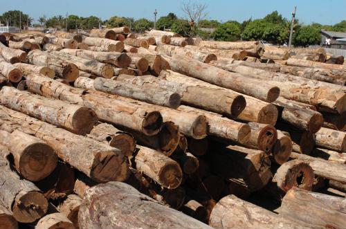 mozambico legname illegale