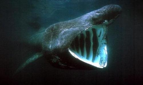 plastica nei muscoli dello squalo