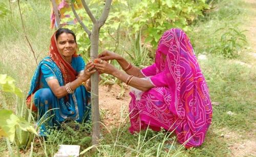 Piplantri India