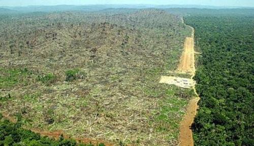 co2 contro deforestazione