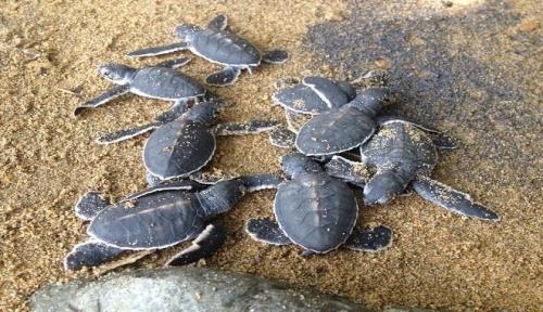 Non vedremo pi le tartarughe al sole dailygreen for Temperatura tartarughe