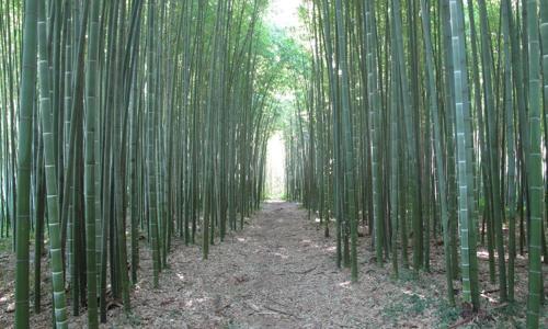 investire in bamb un 39 alternativa sostenibile dailygreen