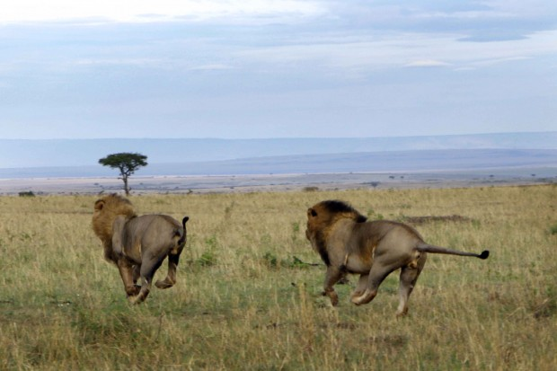 2 leoni sudafrica