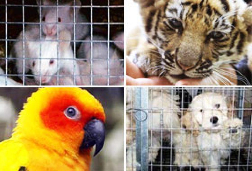 commercio illegale di animali