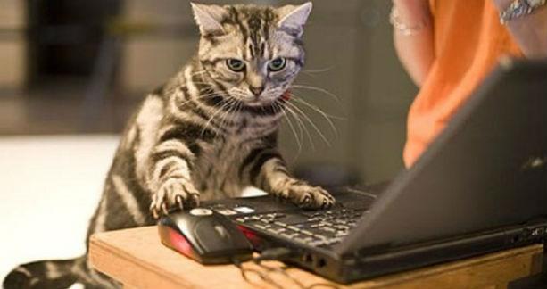 gatti ufficio