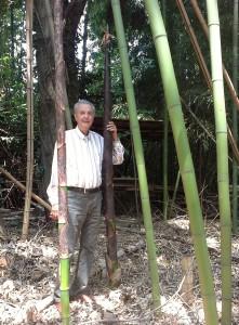 Bambù germoglio Somaschini