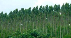 Protezione delle foreste