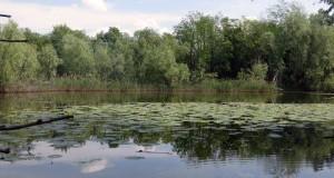 oasi boza