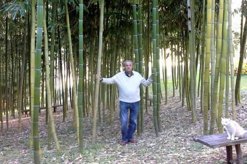 bamb gigante un investimento green dailygreen