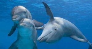I delfini aiutano la ricerca sul cervello