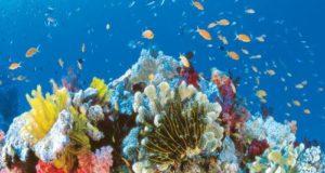 I coralli stanno morendo
