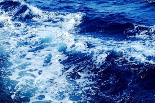 Il profumo del mare è... vivo