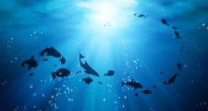 Oceani, il primo rapporto on line