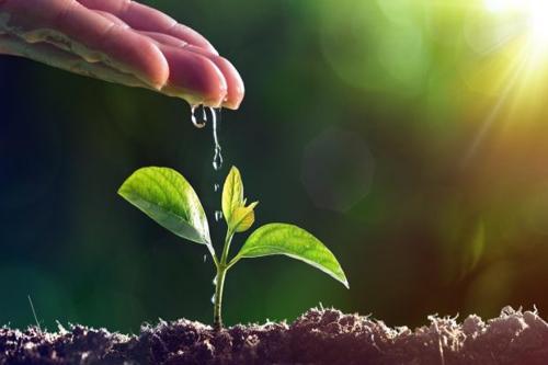Lush premia i migliori in sostenibilità