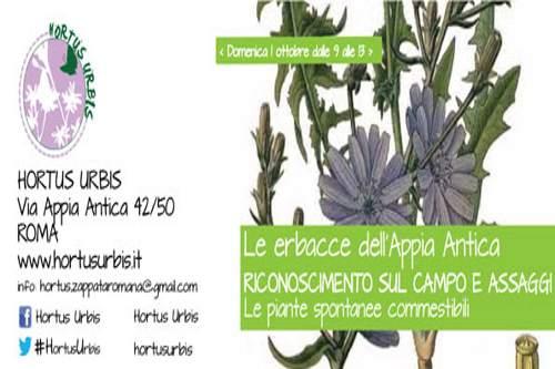 Erbacce dell'Appia Antica all'Hortus Urbis