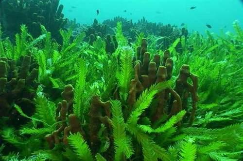 A Fieramilano City si parla di... alghe