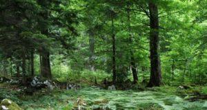 Foreste contro l'inquinamento