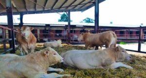 Cooperativa Gemerello punta al biogas