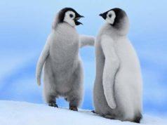 Pinguini, il simbolo della nuova campagna Greenpeace