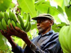 frutta equo solidale