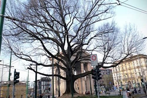 Nasce il progetto foresta in città