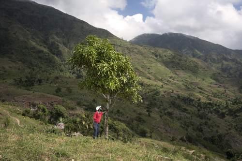 A Natale regala un albero al Sud del mondo