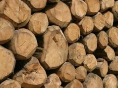 Lotta al legno illegale