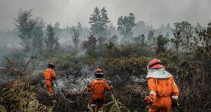 Indonesia incendi