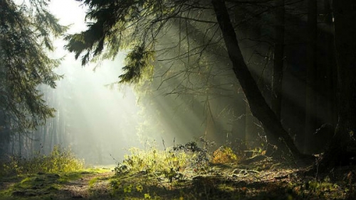 foreste contro fame nel mondo