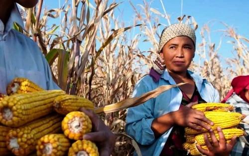fao agricoltura non sostenibile