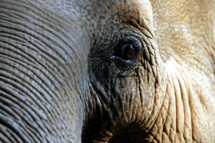 elefanti a rischio