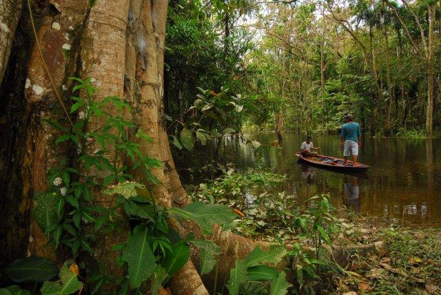 Amazzonia censimento