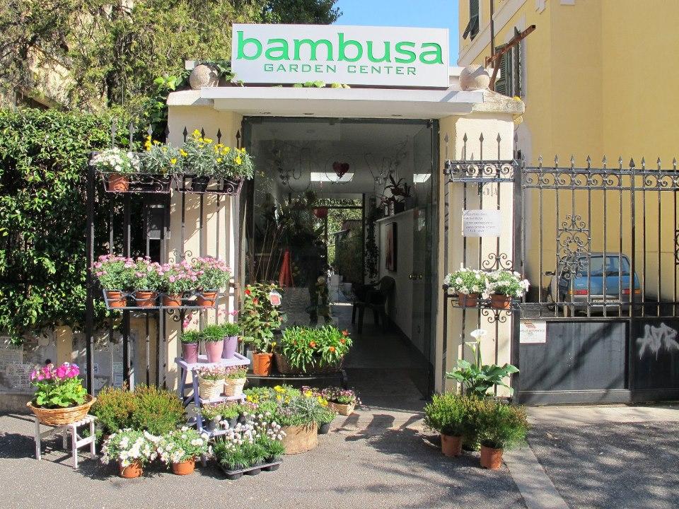 bambusa garden