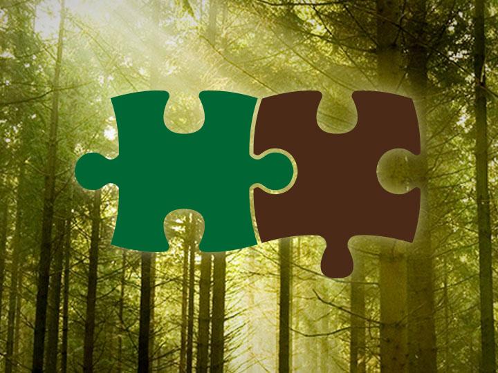 macroregione forestale