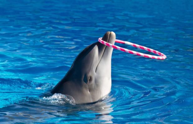 SOS delfini