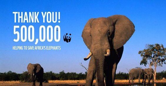 elefanti, petizione