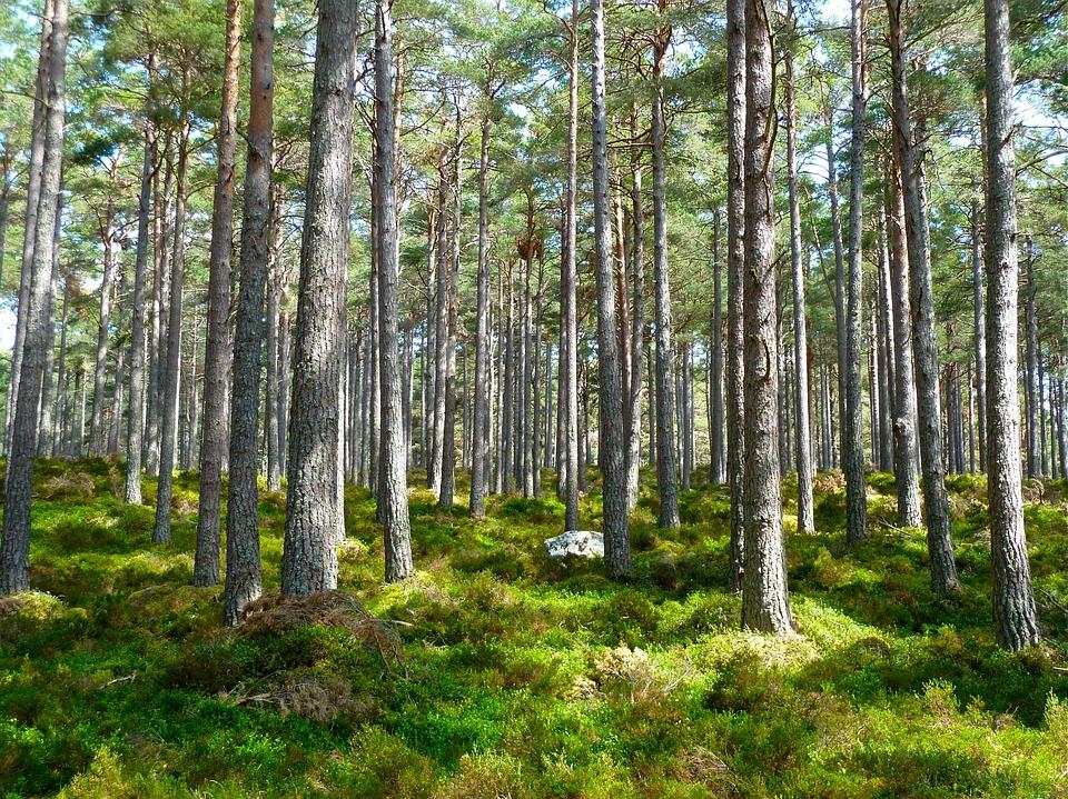 BNP Paribas Cardif alberi