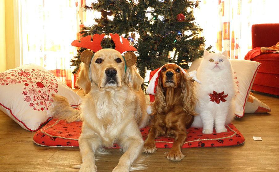 Le piante natalizie possono essere nocive per i nostri animali