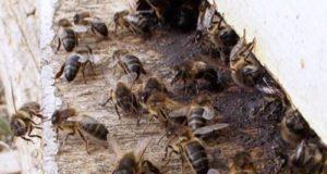 Le api contro gli incendi