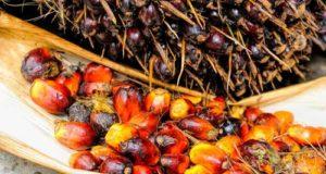 Stop all'olio di palma nelle miscele dei biocarburanti