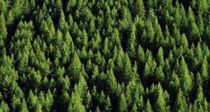 E' nata Forest For Future