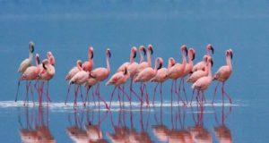 Fenicotteri rosa in laguna