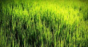 economia verde è il futuro