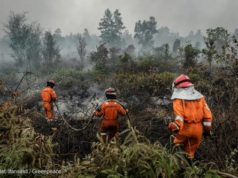 Indonesia incendi