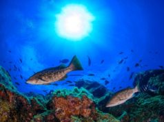 El Hierro, alle Canarie l'isola sostenibile