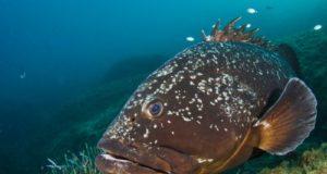 wwf in campo per le specie ittiche
