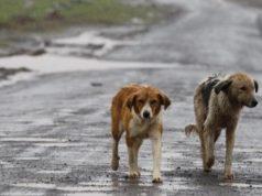 Cani abbandonati