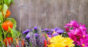 Coronaviurs, il florovivaismo è al collasso
