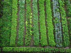 Impianto irrigazione di un orto